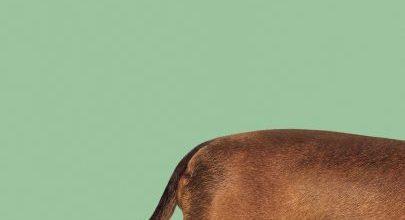 Wiener-Dog Movie Font